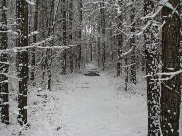 Snow in Mississippi, Форест