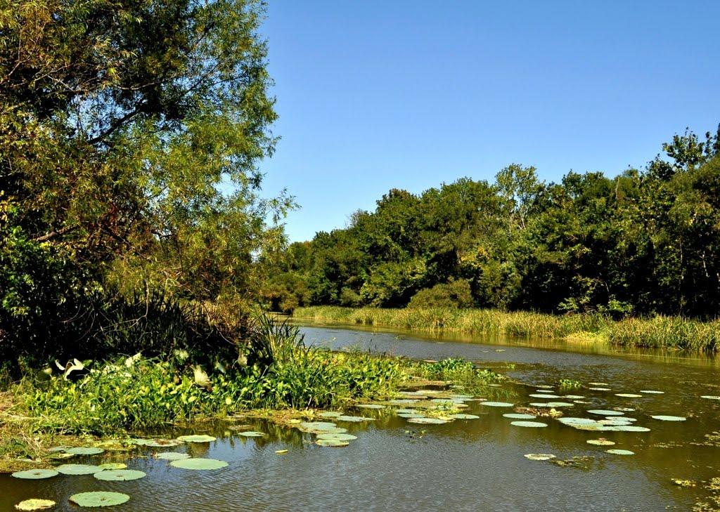 Choctaw National Wildlife Refuge near Womack Hill, AL, Хармони