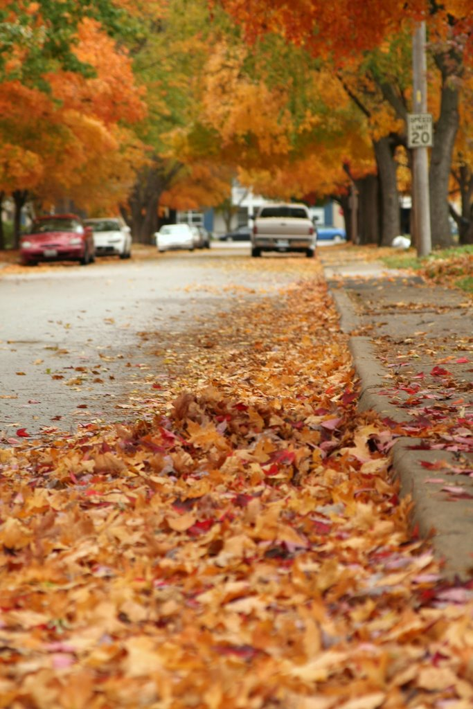 North Kansas City Fall Leaves, Норт-Канзас-Сити