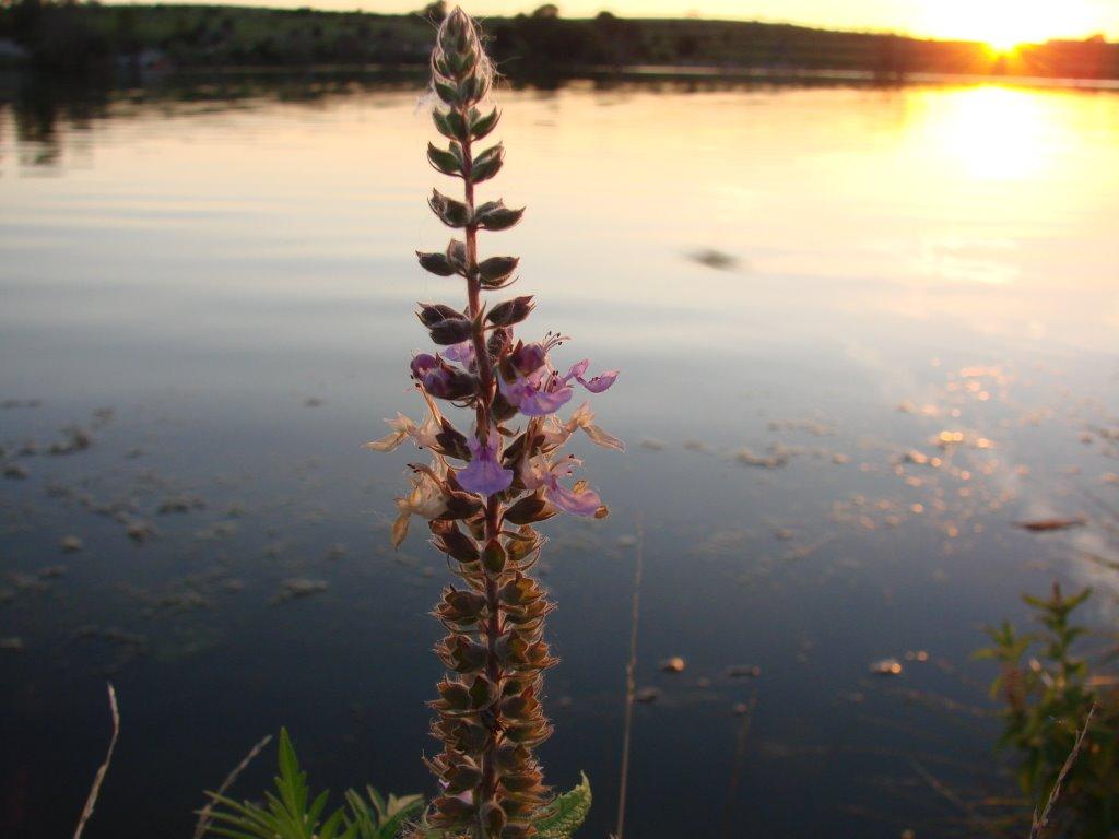Sunset on Walnut Creek Lake, Папиллион