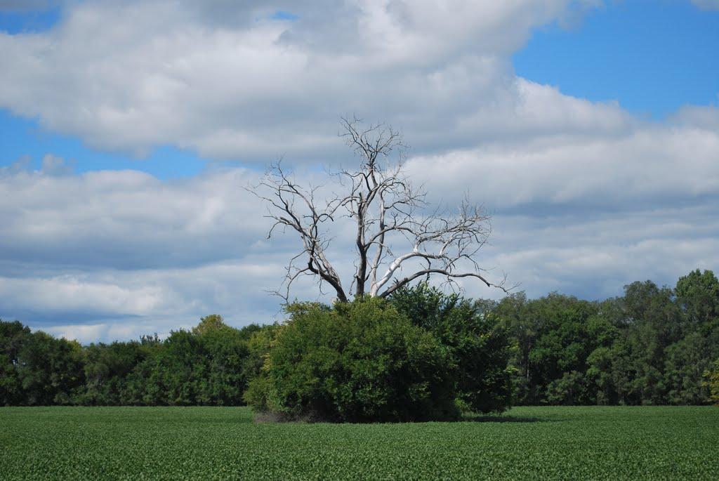 Upside-down Tree, Папиллион