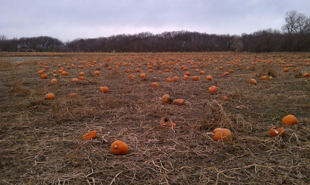 Leftover Pumpkins in the field, Рока