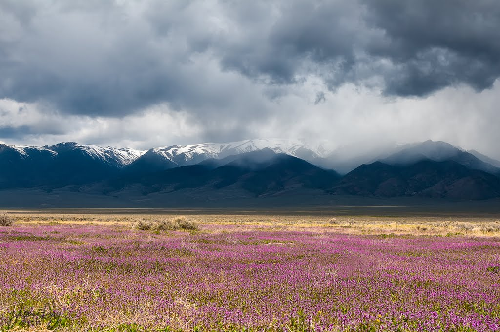 Spring ~ Basin and Range, Nevada, Винчестер