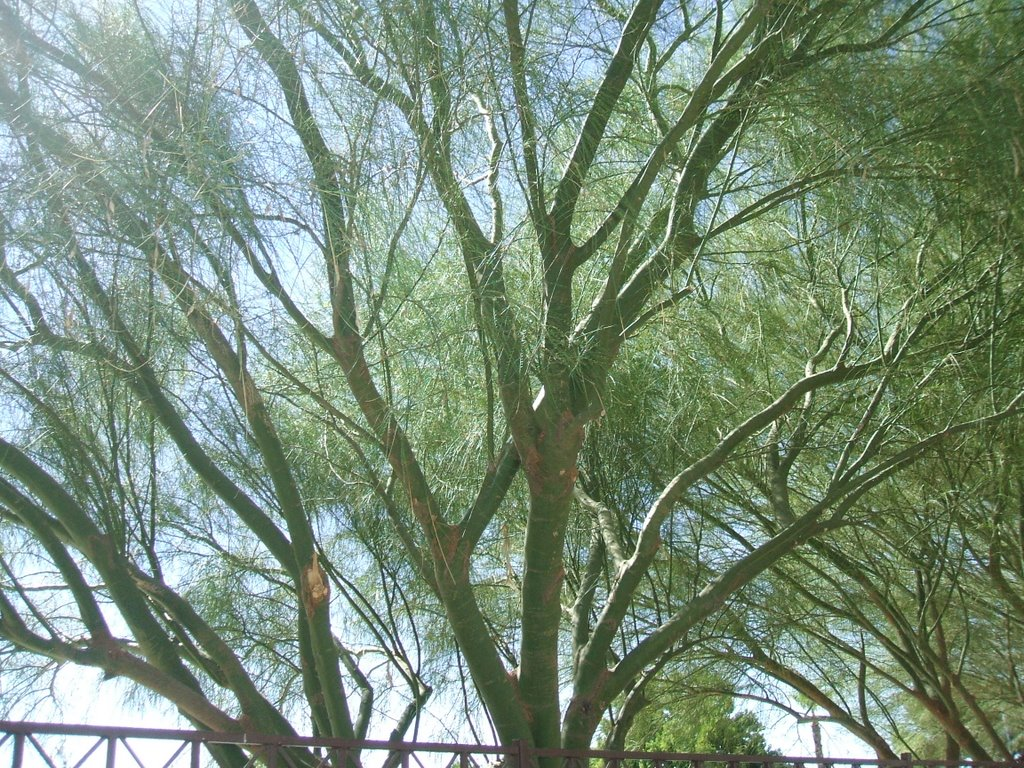 tree, Ист-Лас-Вегас