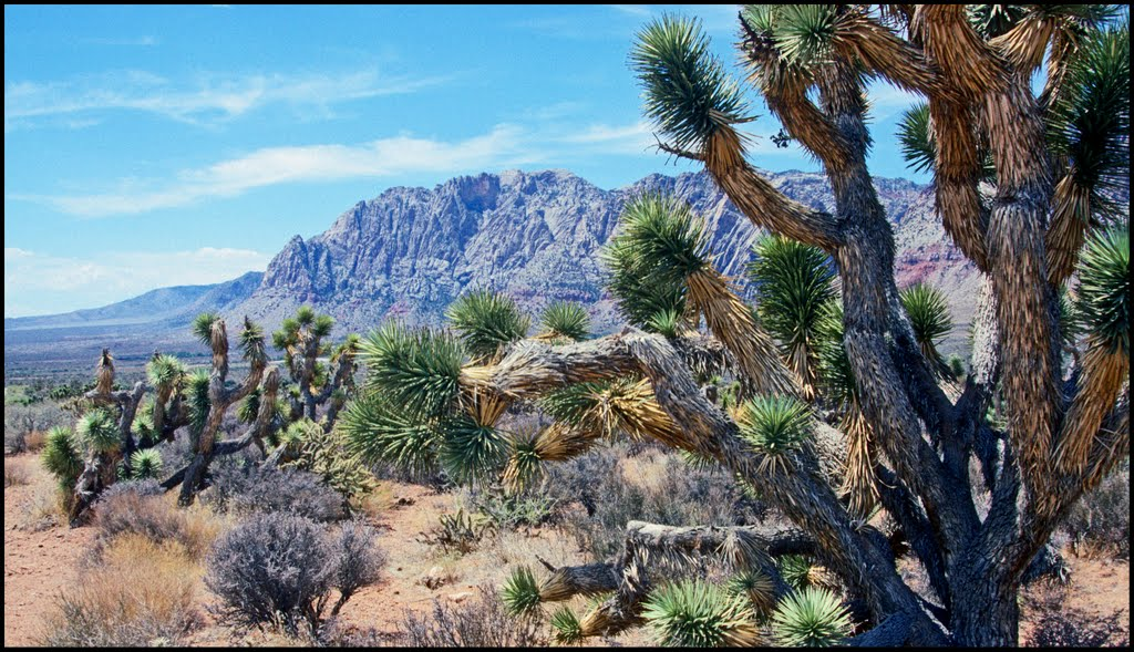 Redrock Canyon, Nevada, Калинт