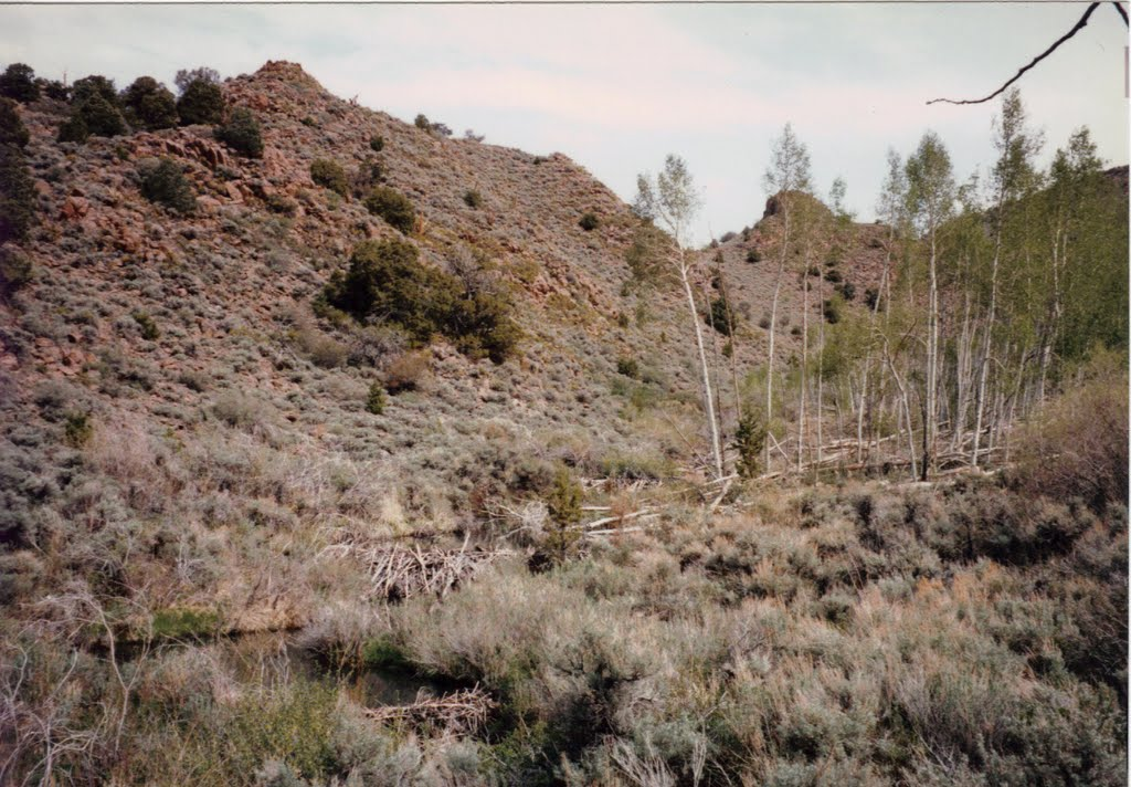 Barley Creek Beaver Dams -Table Mtn Wild 5-21-1997, Калинт