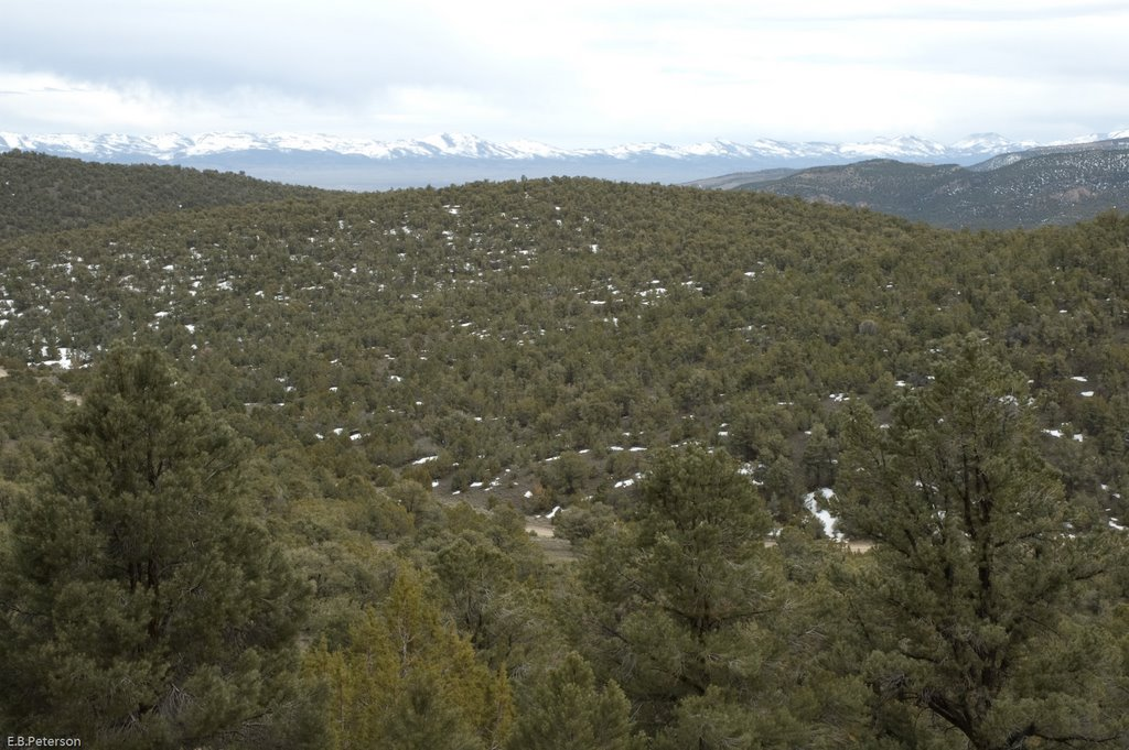 Pinyon Juniper Woodlands, Калинт