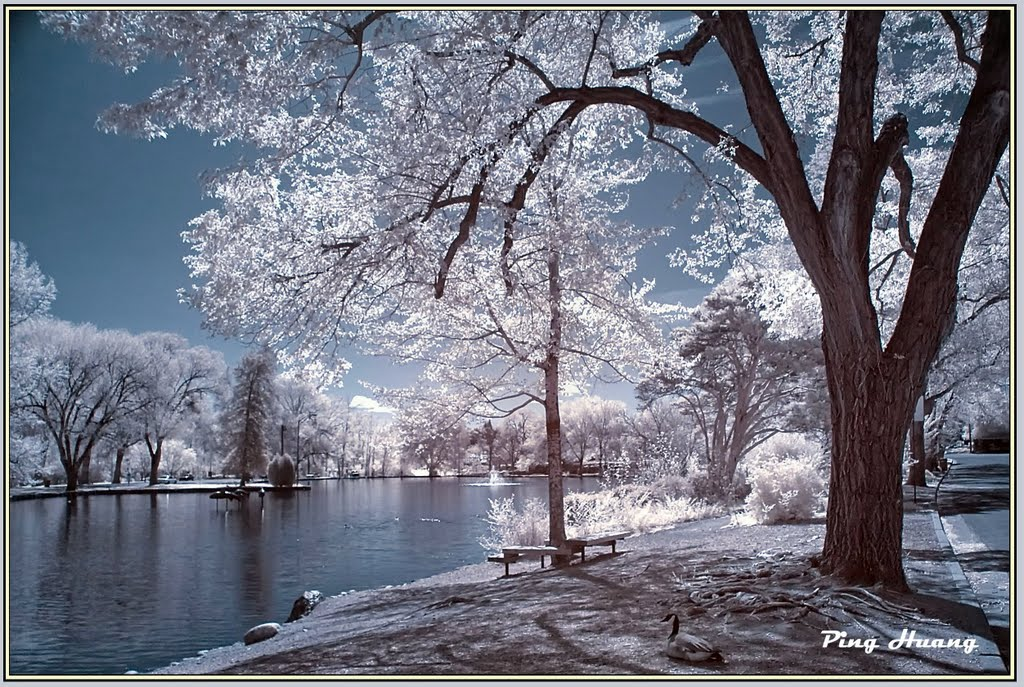 Idlewild Park, Reno, Nevada ( infrared photo), Рино