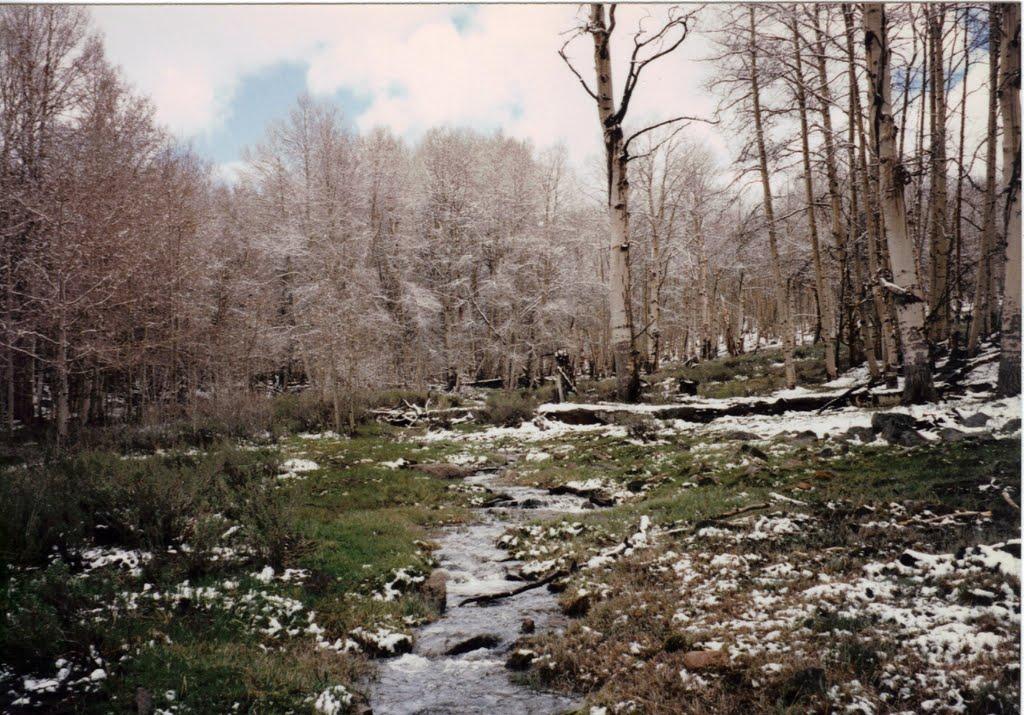Mosquito Creek -Table Mtn Wild 5-24-1997, Хавторн
