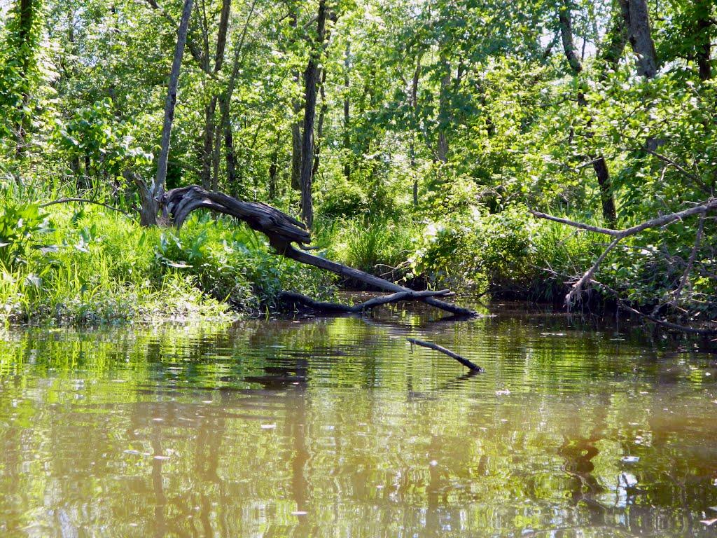 Ramshorn Marsh, Катскилл