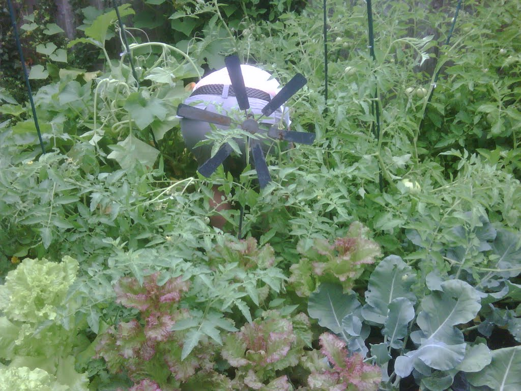 the garden grows, Лауренс