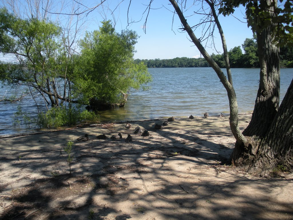 Lake Ronkonkoma Ducks, Лейк-Ронконкома