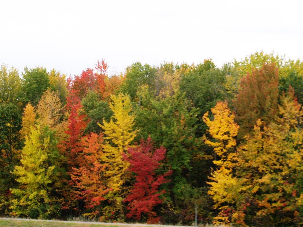 Central New York in Fall full color show, Ливерпуль