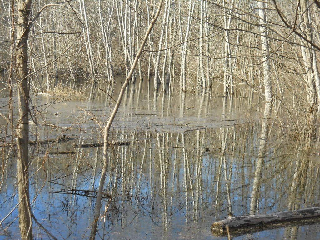 small swampy pond near the quary, Марлборо