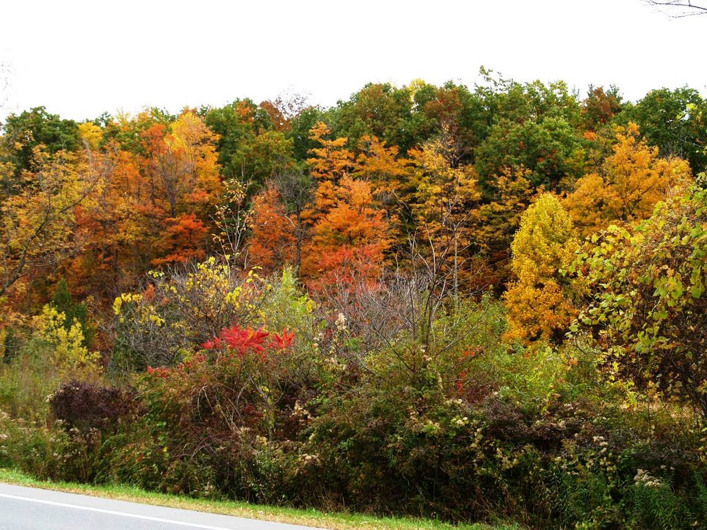 Central New York shows off her fall colors 10.14.010, Маттидейл