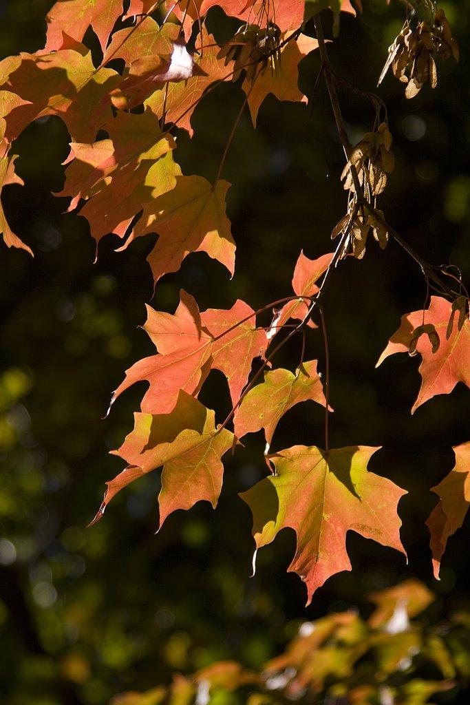 Autumn color, Маунт-Моррис
