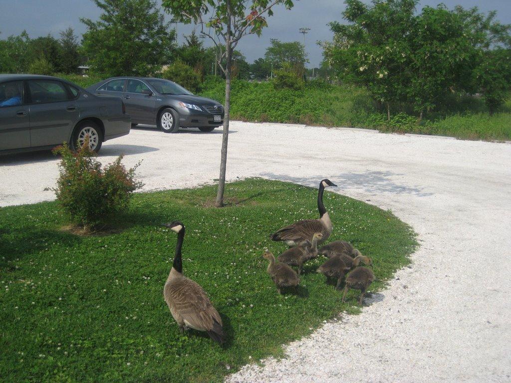 Merrick Road Park - entrance parking lot, Меррик