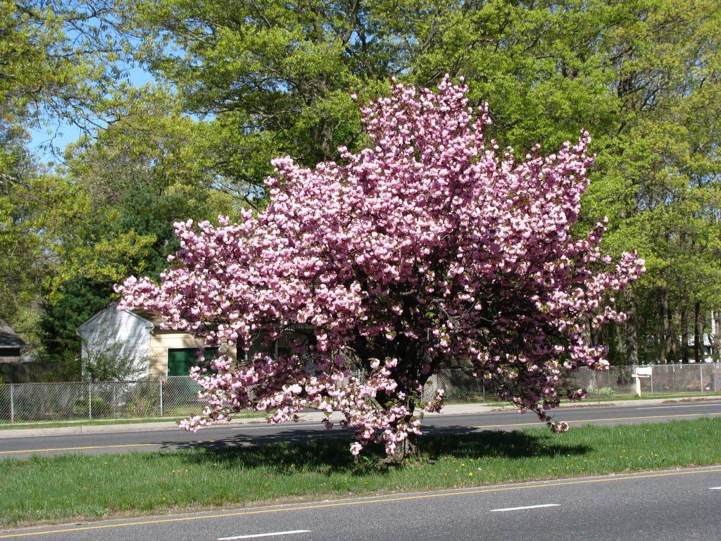 Spring in East Yaphank, Миддл-Айденд