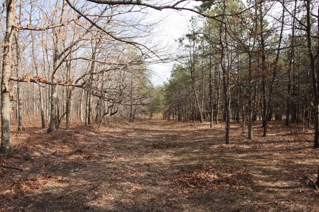 Rocky point Pine Barrens, Миддл-Айденд