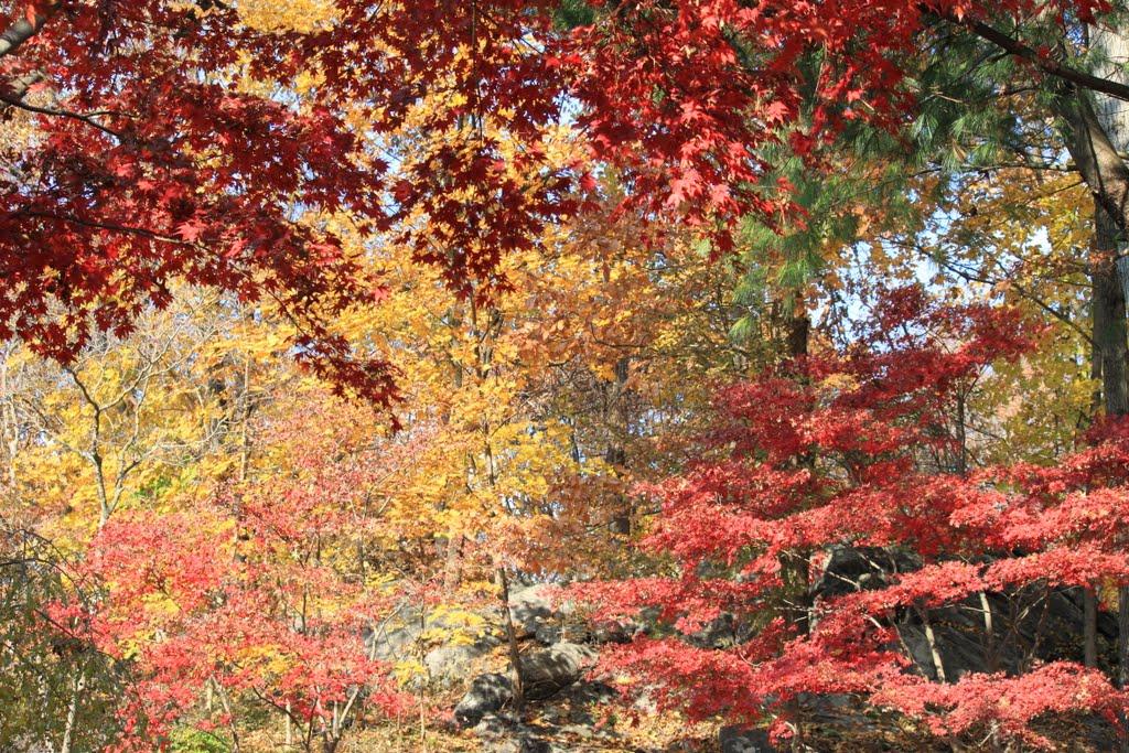 2011-11-11, Нью-Йорк-Миллс