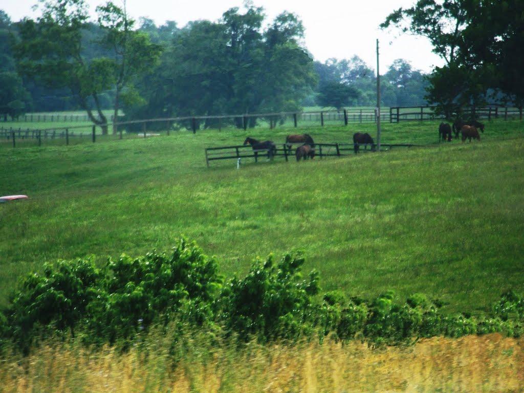 Someday..Im running free again!!!,(Algun dia ..correre libre otra vez),Kentucky,USA, Файрвью-Парк
