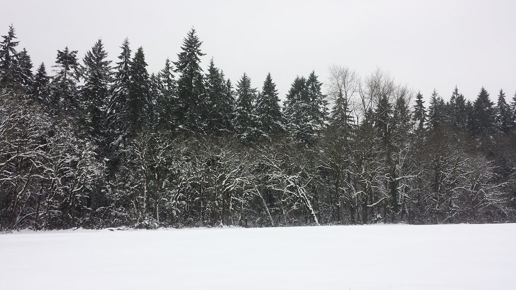 January 2014 Snow, Сант-Хеленс