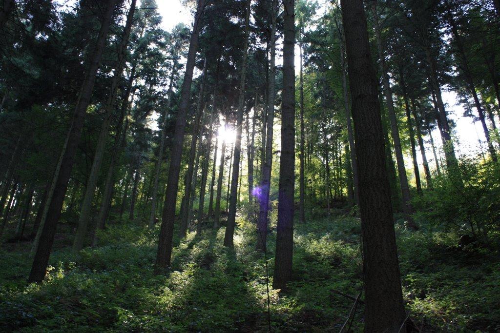Wald Baden Baden, Экономи