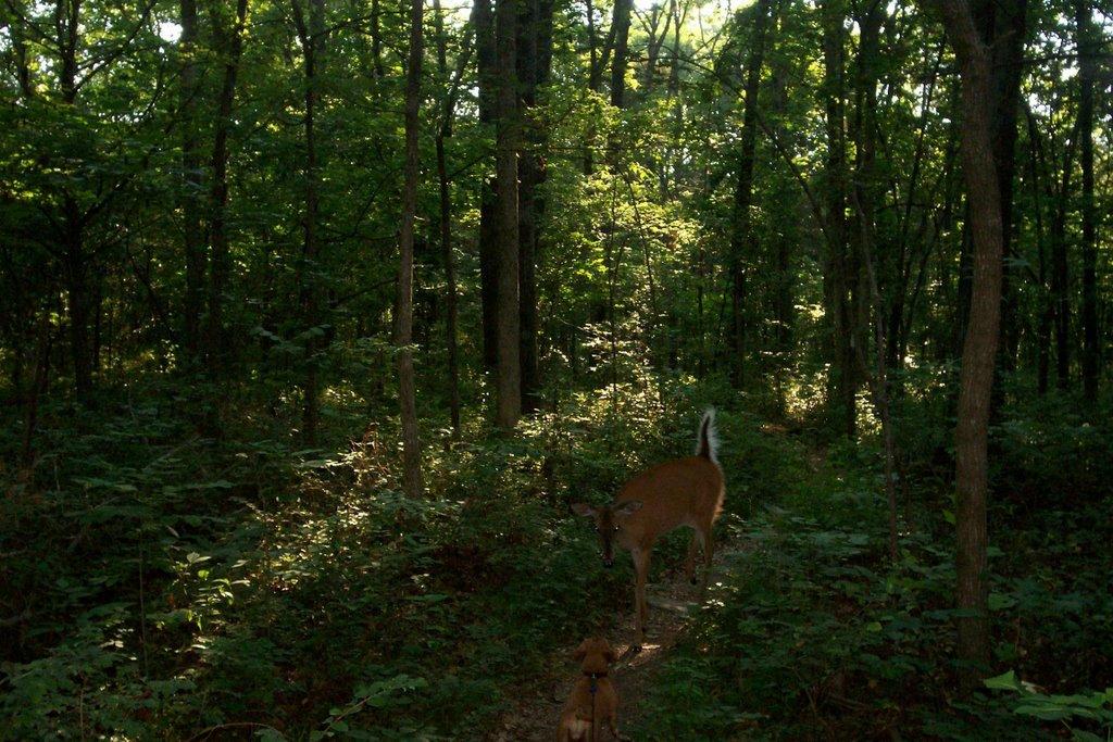 deer, Рутерфорд