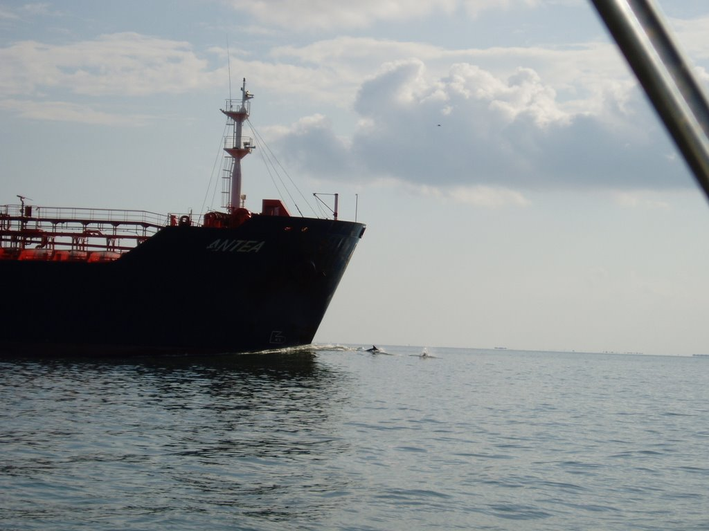 Houston Ship Channel - ship with bow riding dolphins 20090815, Комбес
