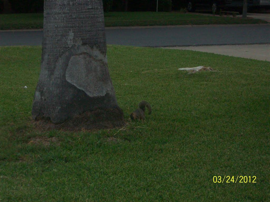 Squirrel, Мак-Аллен