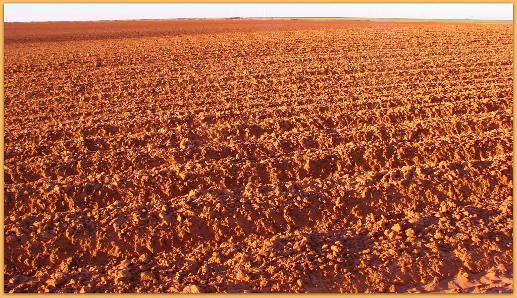 *Texas Red Dirt*, Нью-Хоум