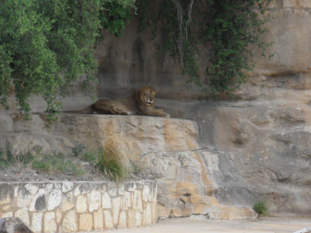 San Antonio Zoo,Tx, Олмос-Парк