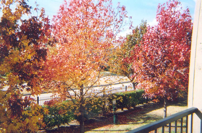 Texas Fall Colors, Ричардсон