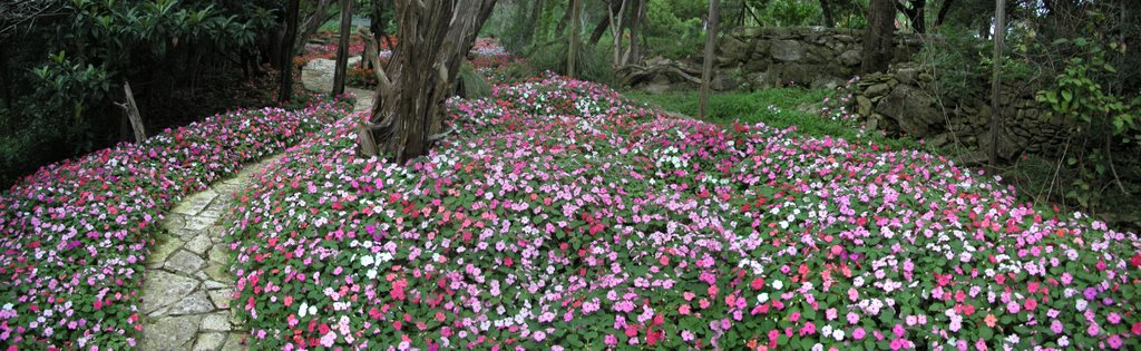 our garden of Impatiens, Роллингвуд