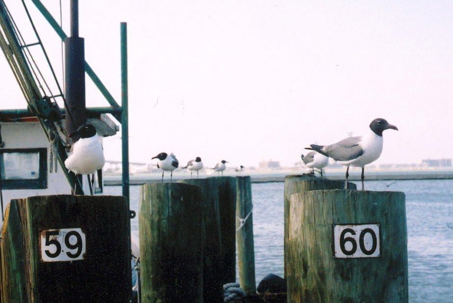 gaviotas en el puerto, Тафт