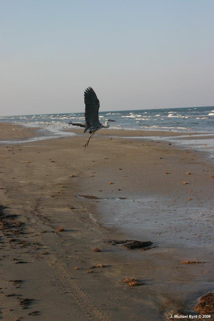 Padre Island National Seashore  (June 2006), Тафт