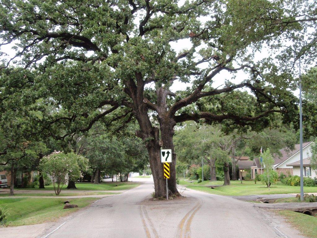 Tree in Pecos street looking East, Хантерс-Крик-Виллидж