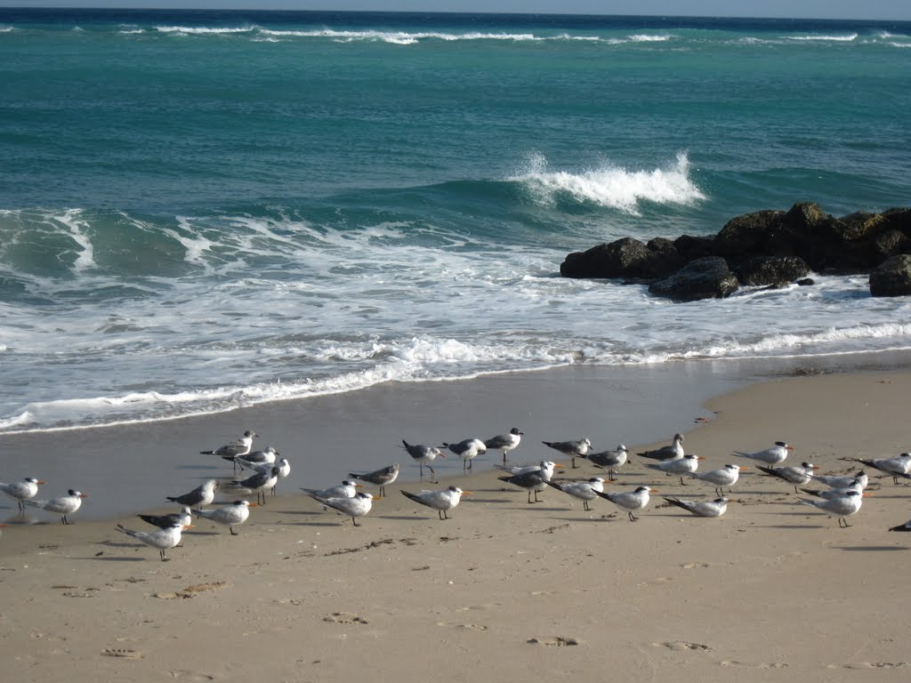 christian singles in boynton beach Boynton beach florida, i enjoy listening to live music and going to the beach much more to be discussed when we talk to each other.