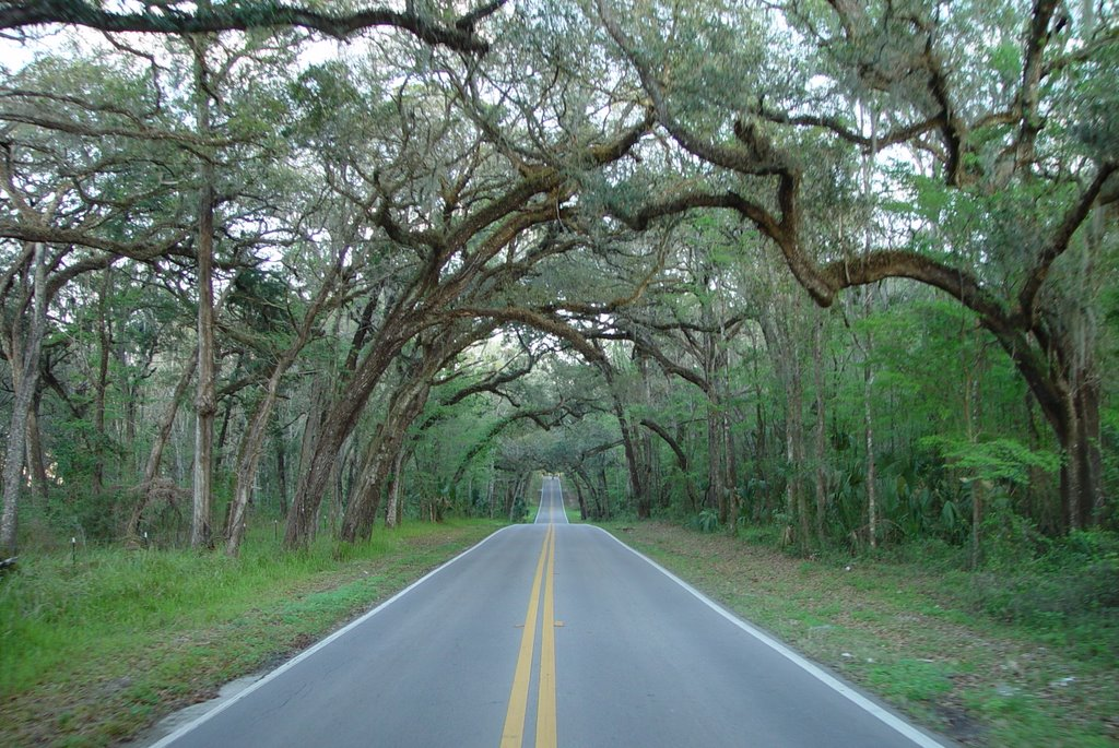 old Fort Dade road, between Old Spring Hill & Brooksville (3-2-2008), Ист-Лейк-Парк