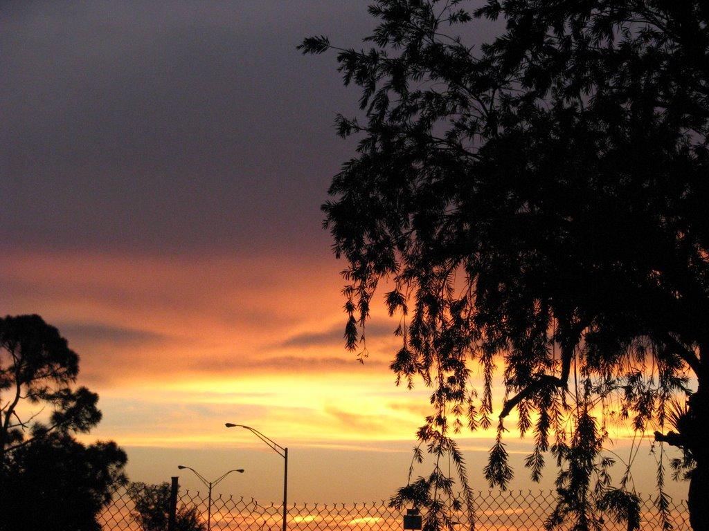 Miami Sunset, Карол-Сити