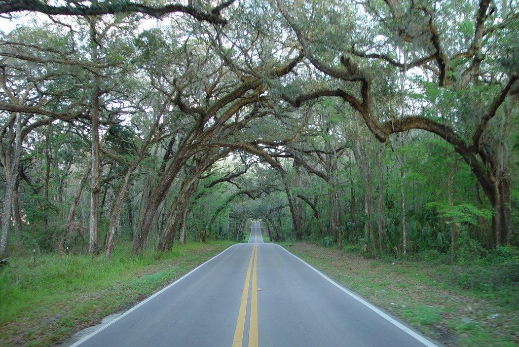 old Fort Dade road, between Old Spring Hill & Brooksville (3-2-2008), Киллирн Естатес
