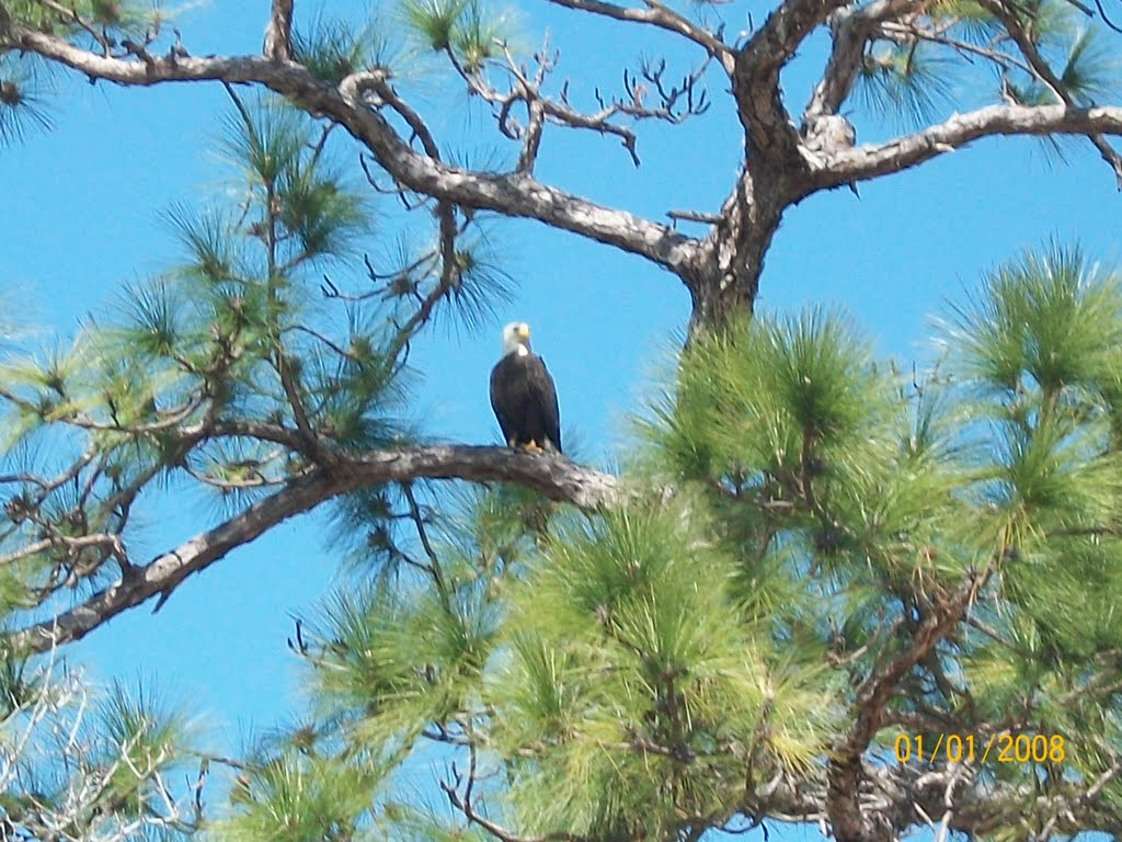 Bald Eagle, Клауд-Лейк