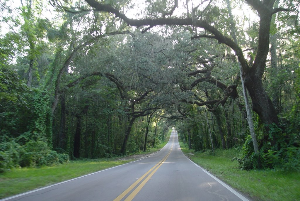 one of the nicest canopy roads in Florida, Fort Dade ave (8-2009), Колльер-Сити
