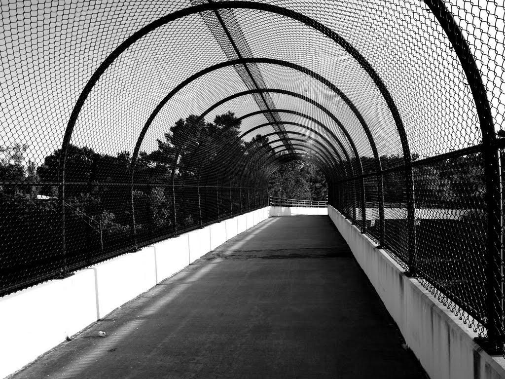 Suncoast Bikeway Bridge, Лак Магдален
