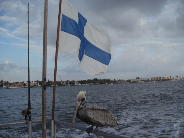 one footed pelican and flag of Finland, Лантана