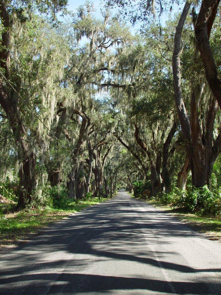 canopy road, Lady Lake blvd, Lady Lake, Florida (11-4-2006) 1, Леди-Лейк