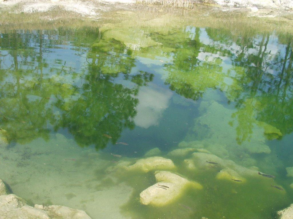 Joes Sink Fish, Оранж-Парк
