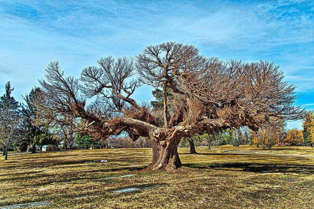 Altorest Memorial Park #1, Вашингтон-Террас