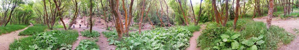 Rope swing, Neffs Canyon, Маунт-Олимпус