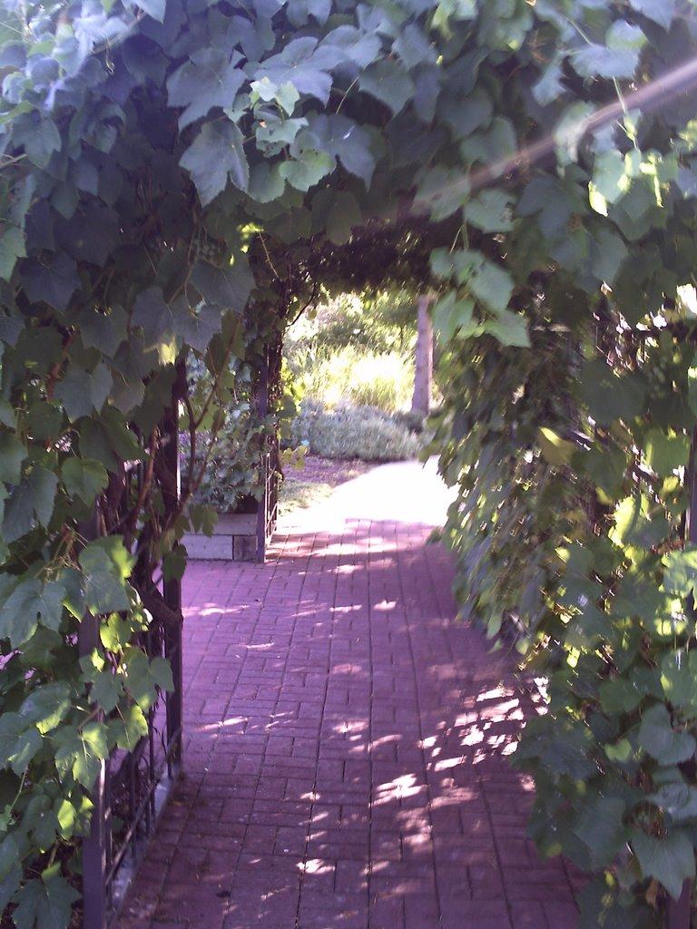 Arbor at Jordan Valley Conservation Gardens, Мидвейл